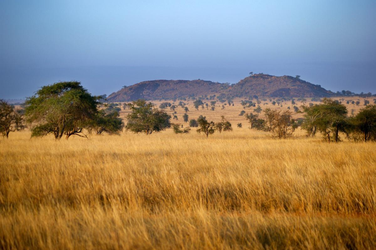 SABANA: Padang Rumput Yang Ada Pepohonannya