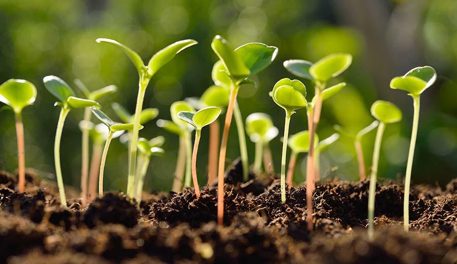Tumbuhan Berbiji (Spermatophyta) Terbuka dan Tertutup