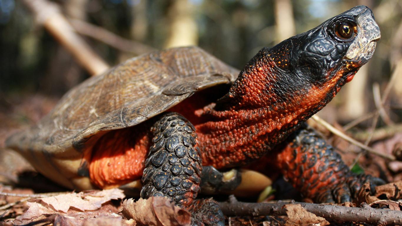 Persebaran Fauna di Dunia