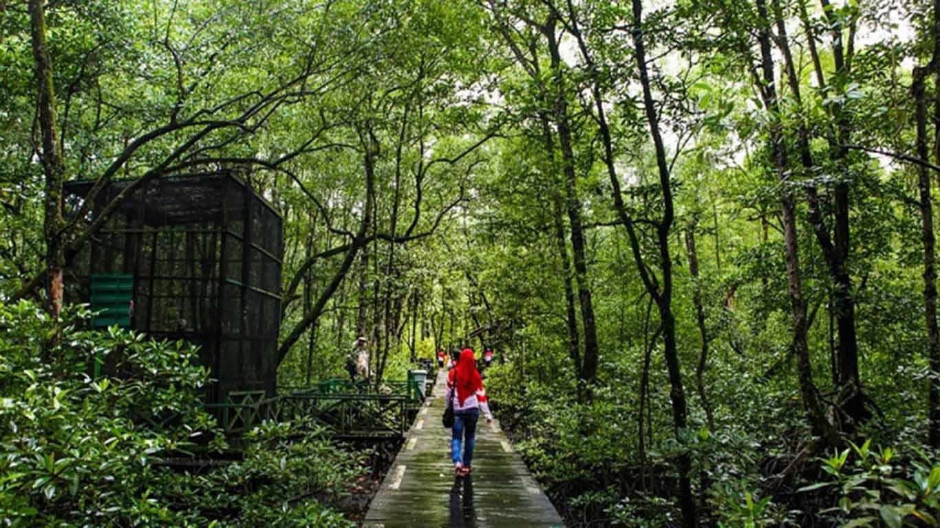 Cara Melestarikan Hutan